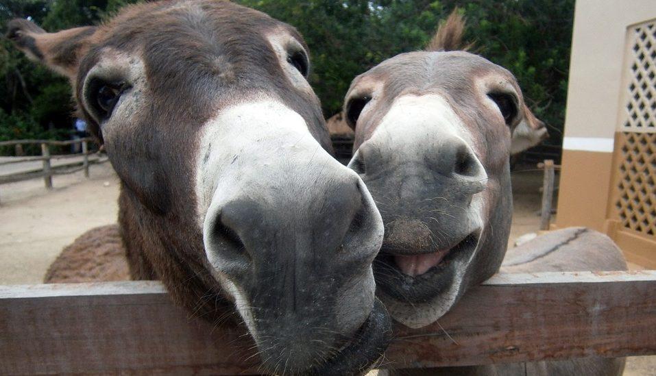 donkey wordpress team